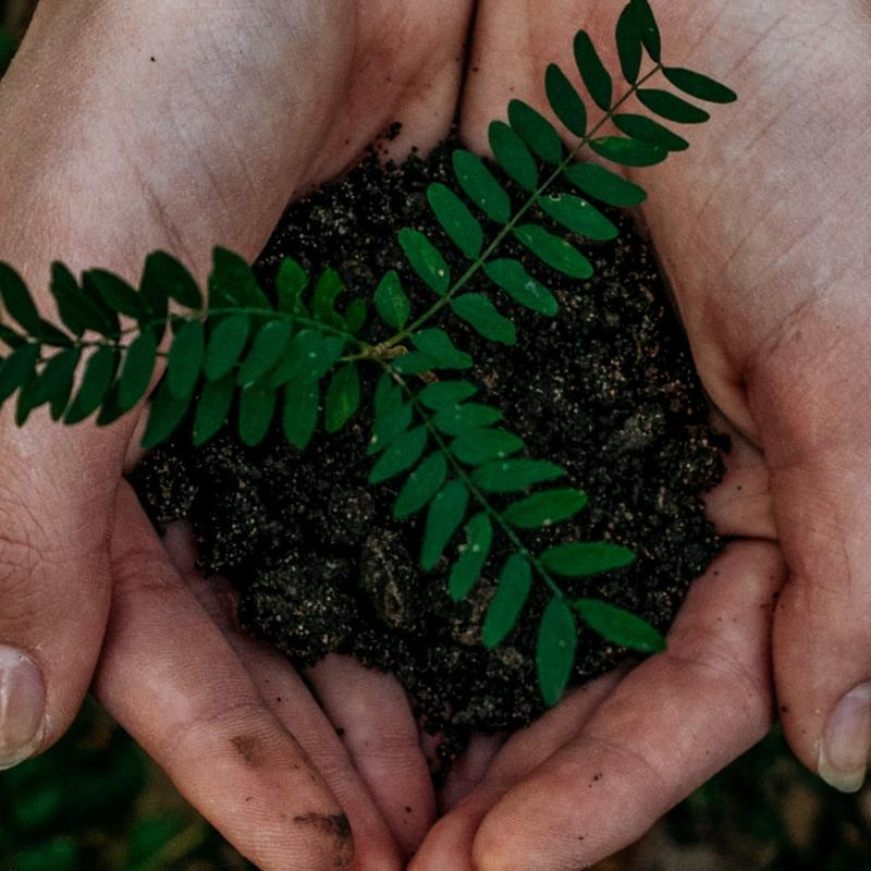 nuture seedling in hands